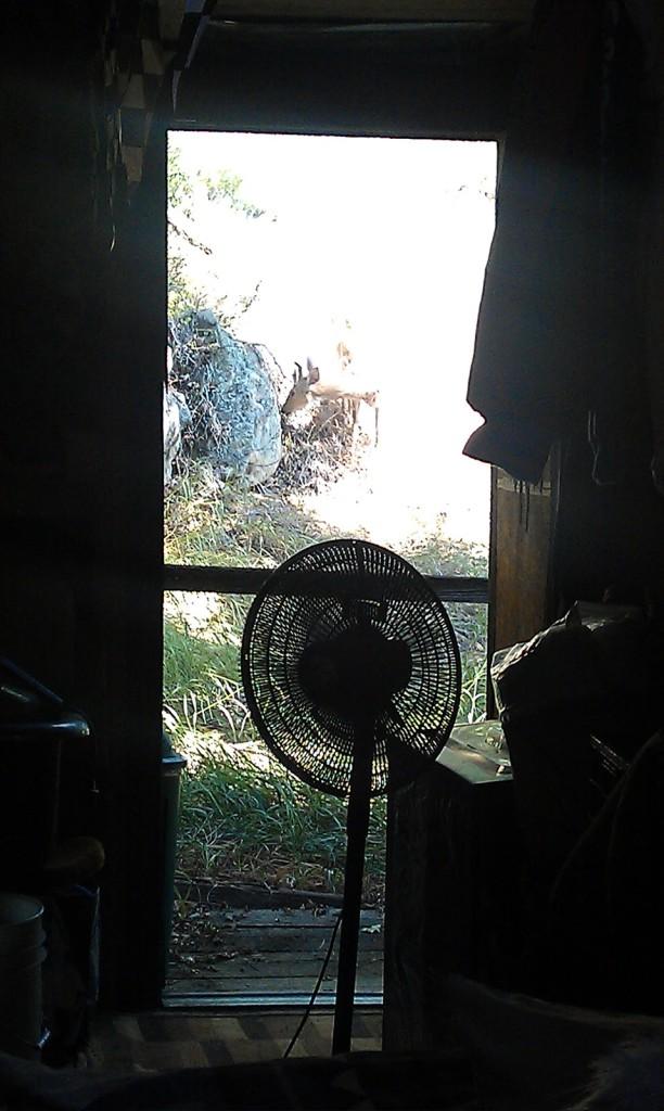 deer out the back door